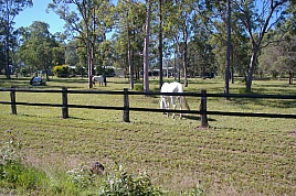 Bounce Back ® horse fence by BOUNCE BACK ® HORSE FENCING, NSW 2164